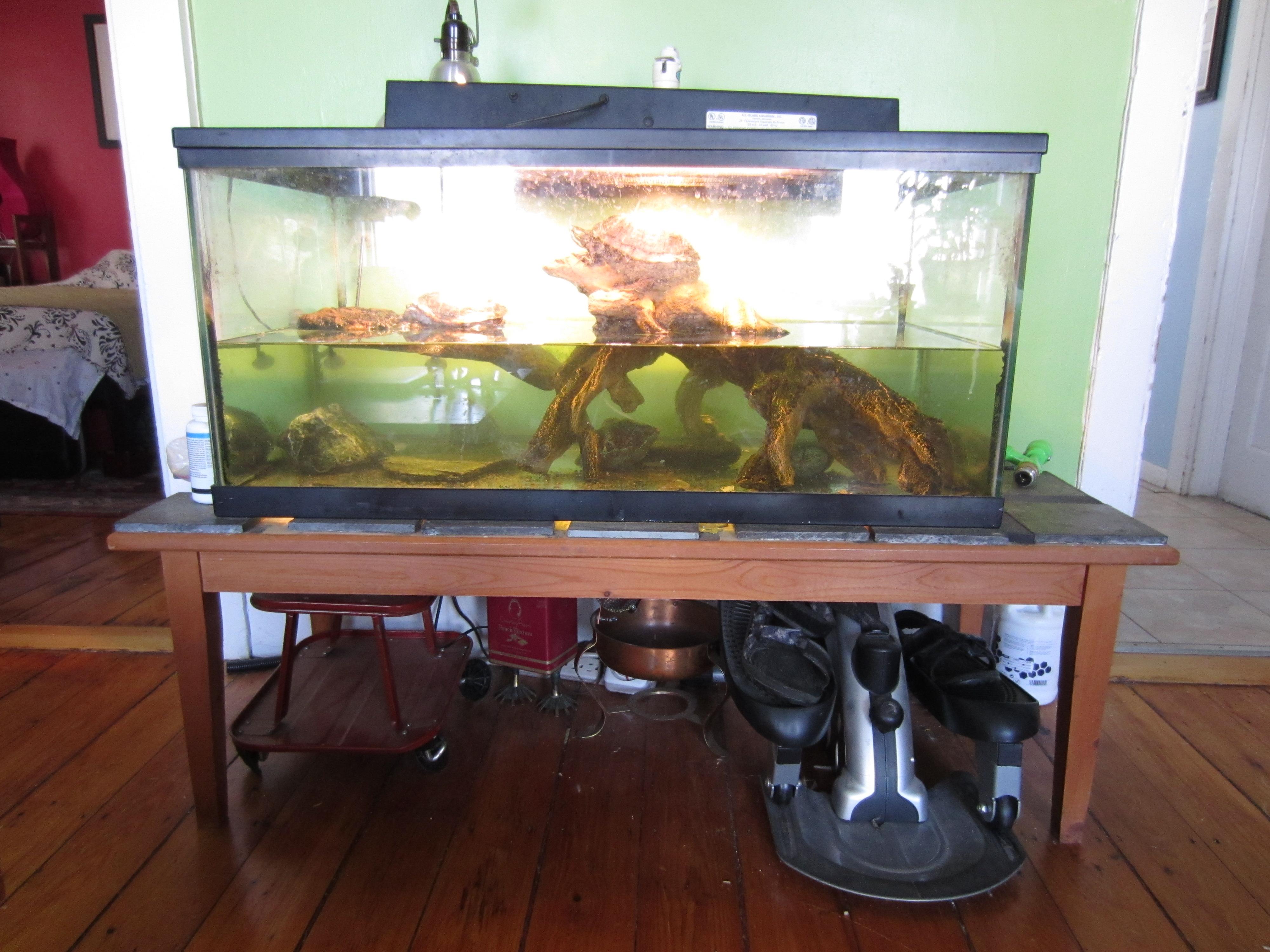 Turtle Tank Bog Filter tales of a plant geek