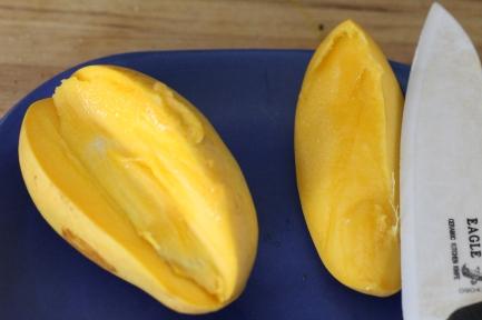 mango germination 3