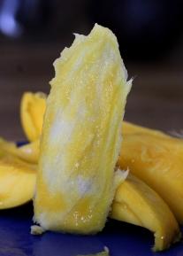 mango germination 4