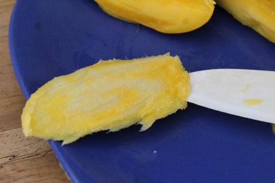 mango germination 5