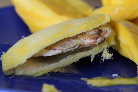 mango germination 6